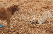 pic of dogs exercising at kennel