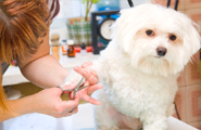 pic of dog getting nails clipped