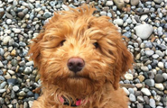 doggie daycare reservation information