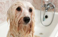 pic of wet dog