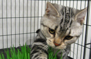 pic for required cat vaccinations for lodging