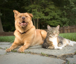 pic of dog and cat sitting together