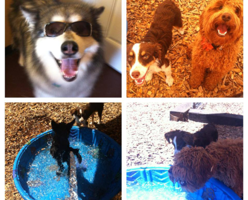 collage of multiple pics of dogs